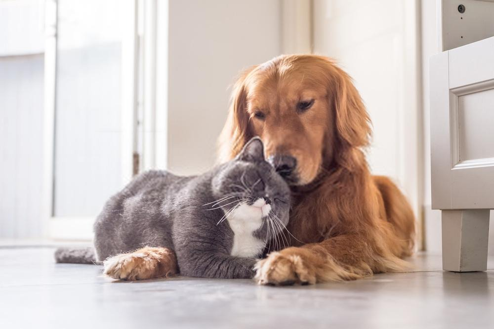 Best Pets to Adopt