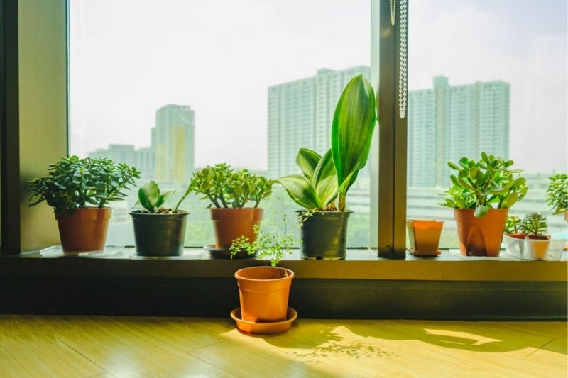 8 Easy To Grow Indoor Plants In India For Clean Air & Decor
