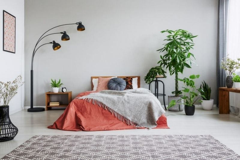 7 bedroom plants that help you sleep better and purify the air
