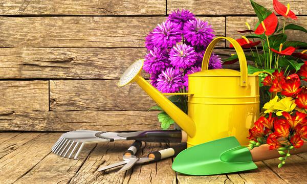 Gift Gardening kit
