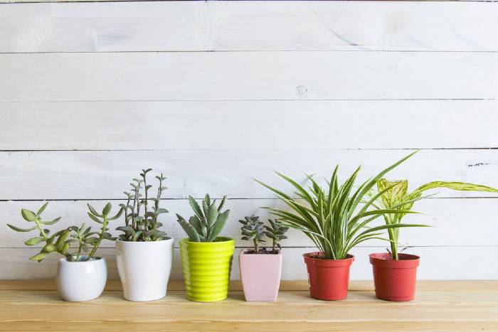 Top 14 Best Air Purifying Plants (Indoor) In India 2019 – Review & Buying Guide